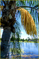 Palm on the Pond