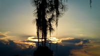 Pine, Spanish Moss & Clouds at Sunset