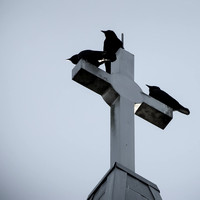 3 Crows on a Steeple