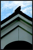 Crow on Church Roof
